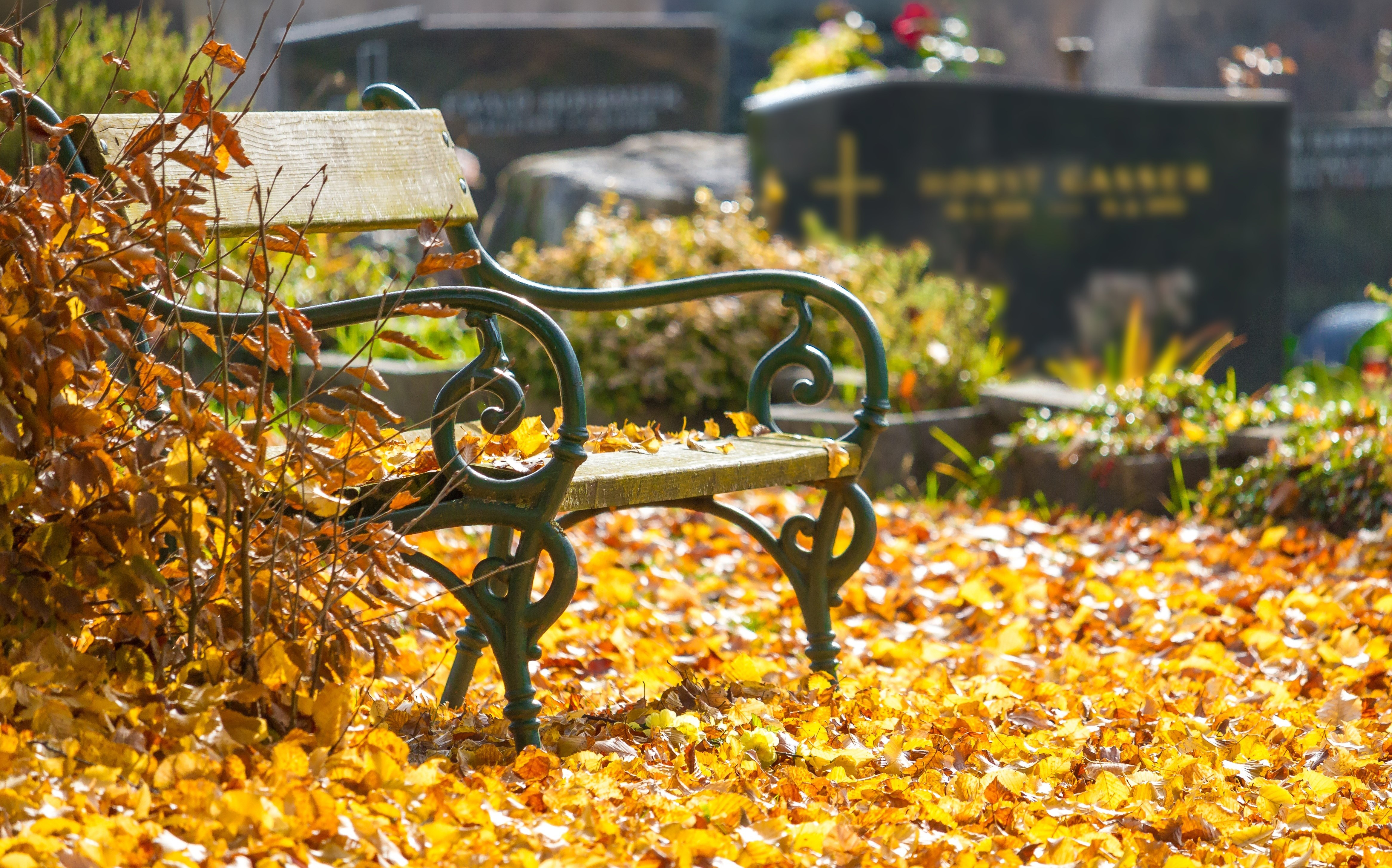 Image shows a cemetery bench surrounded by autumn leaves